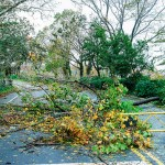 Superstorm Sandy wrought havoc and devastation in at least 30 parks, piers and playgrounds in upper Manhattan | NY Daily News