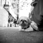 Uptown Dog Love: Barkly Comes To NYC